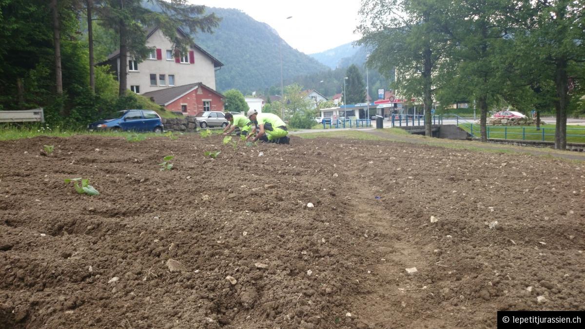 Jardin potager improvisé - école enfantine des Oeuches